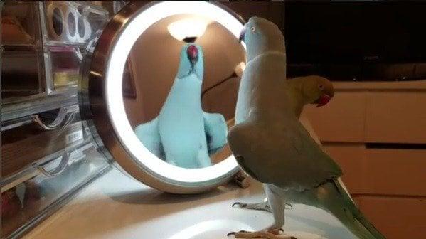 Už ste sa dnes videli v zrkadle? Vaša reakcia bude možno podobná