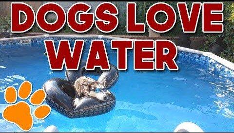 Sú pes a voda kamoši? Nasledujúce VIDEO vám dá odpoveď!