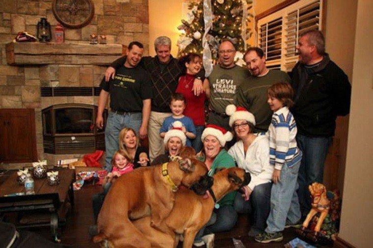 Keď vám psy pokazia vianočné foto