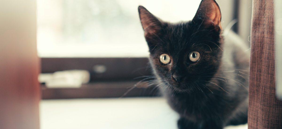 Čierna mačka podľa povery prináša smolu