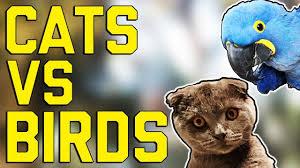 VIDEO Kto z koho? Mačky verzus vtáky!