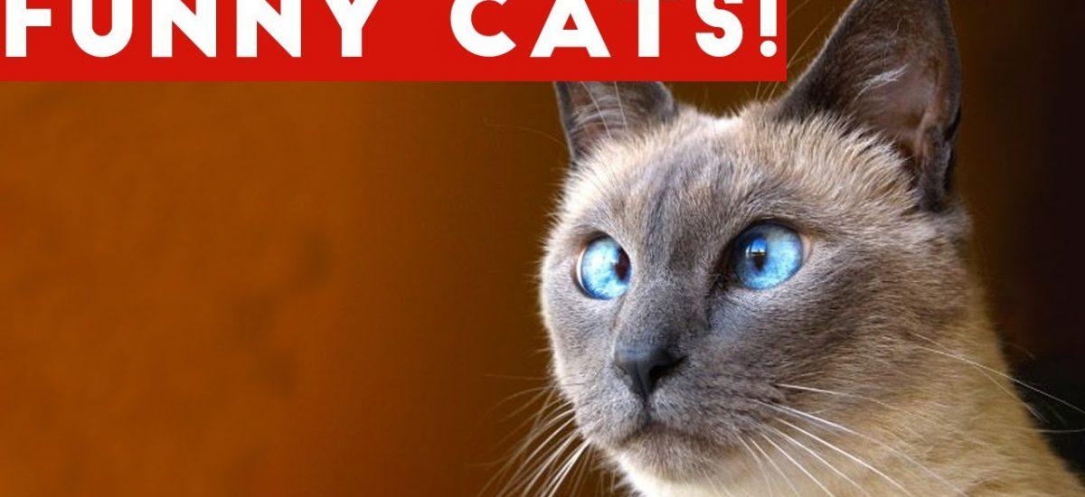 nové mačička videá zadarmo on-line pozeraním