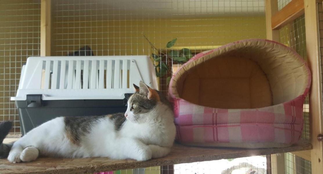 Malá mačička a zadok