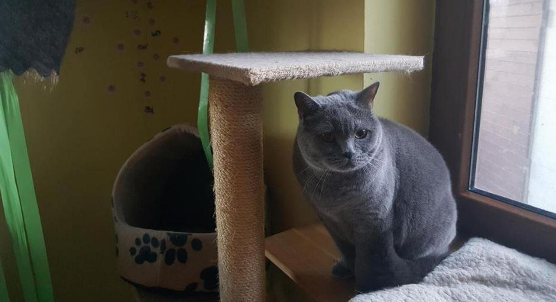 www veľký mačička zadok