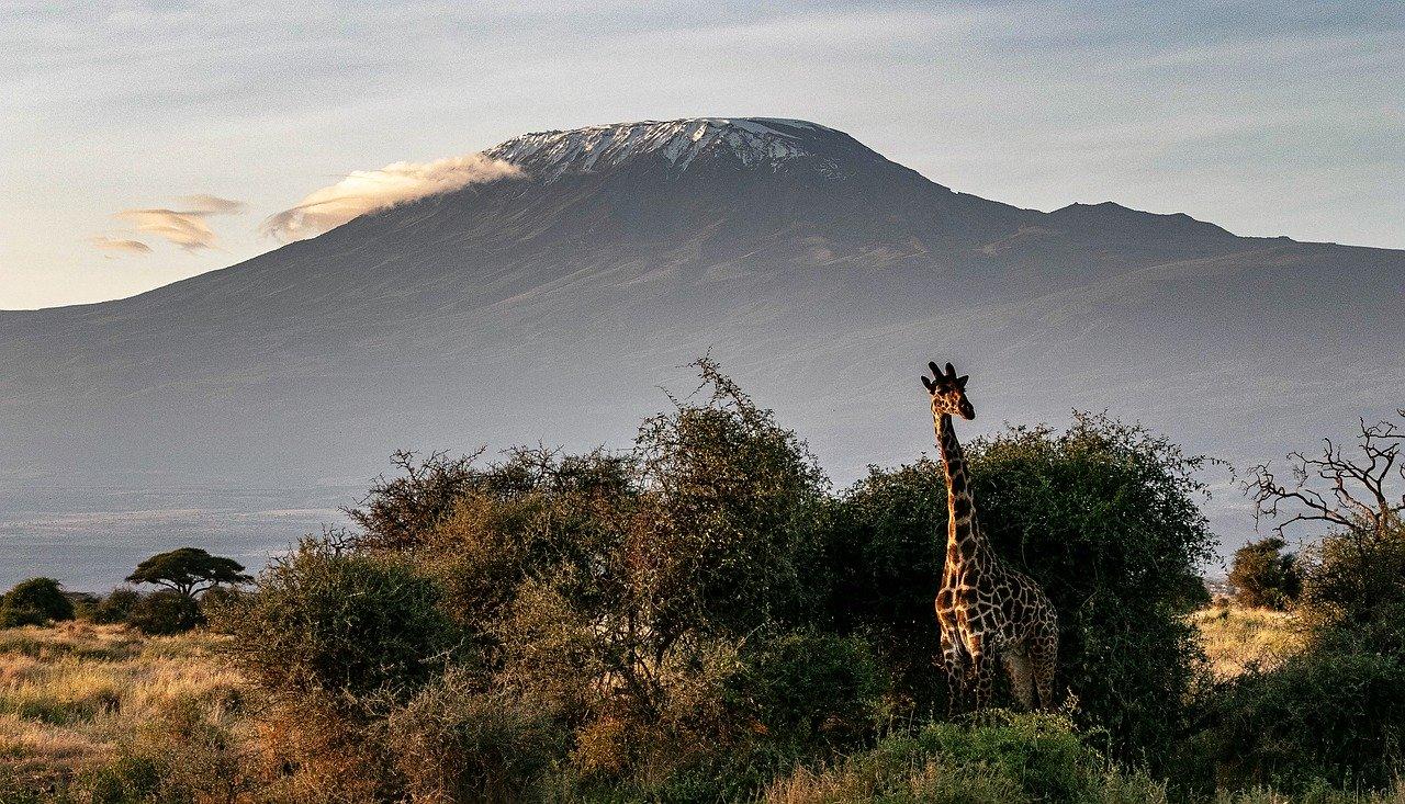 Žirafa pred Kilimandžárom
