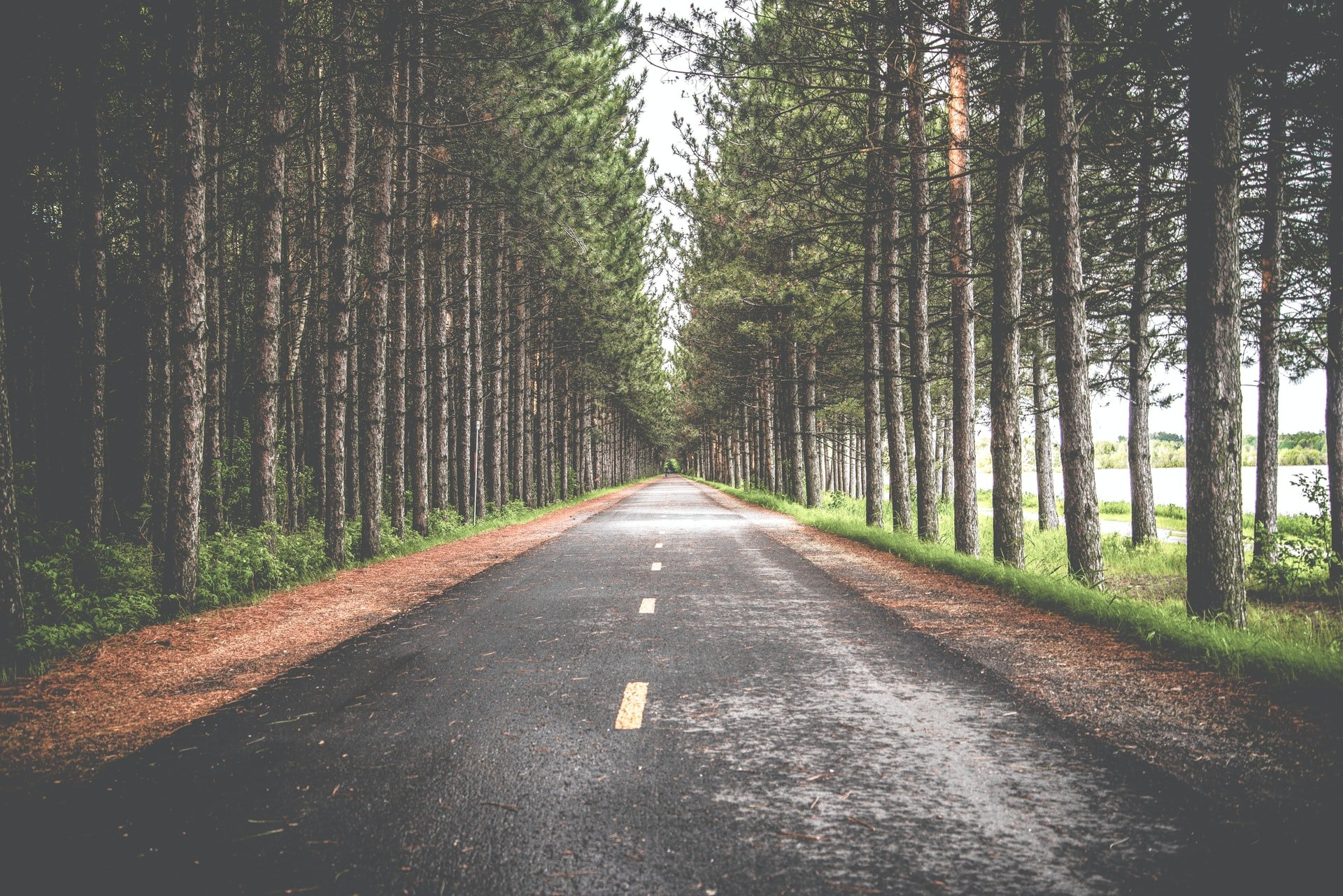 Cesta medzi stromami