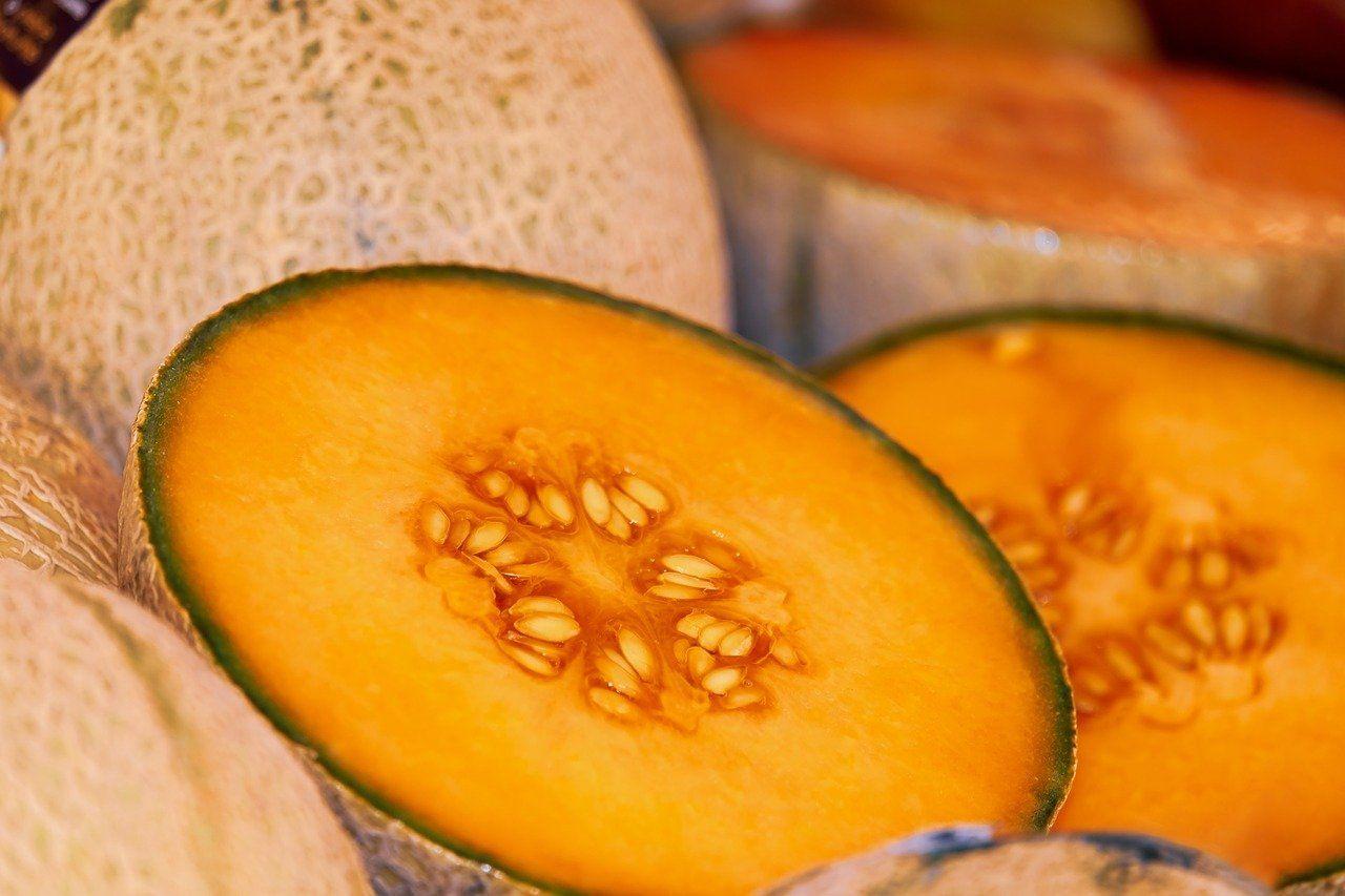 melón galia