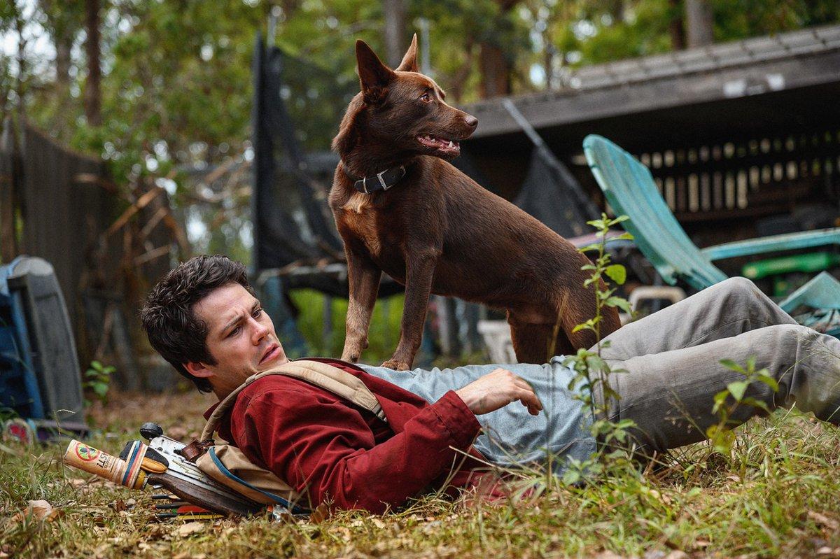 Kombináciu bojazlivého Joela a odvážneho psa si zamiluješ