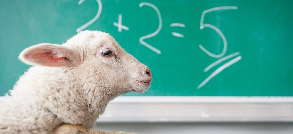 ovca a matematická rovnica
