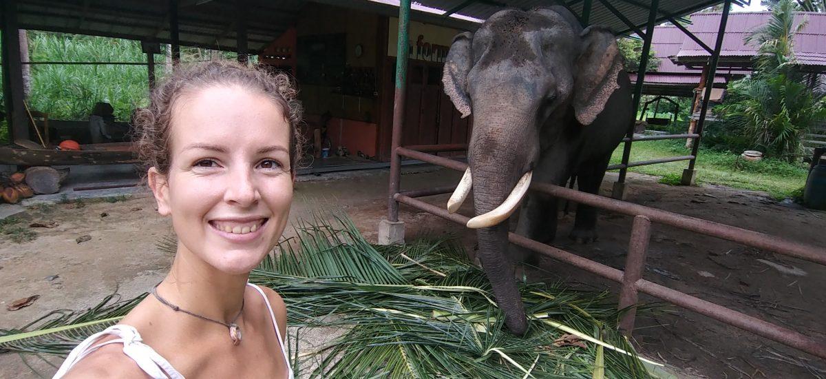 dievča so slonom